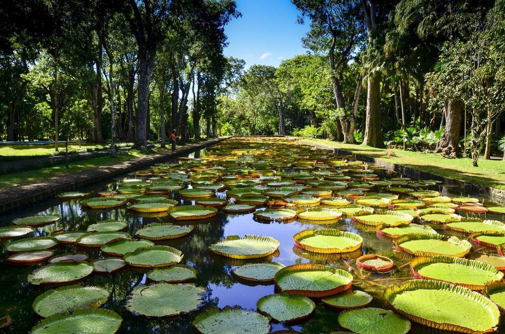 Villa Île Maurice jardin de Pamplemousse
